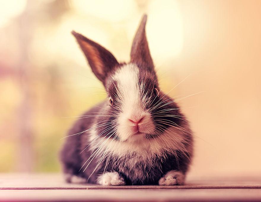 ارنب 14