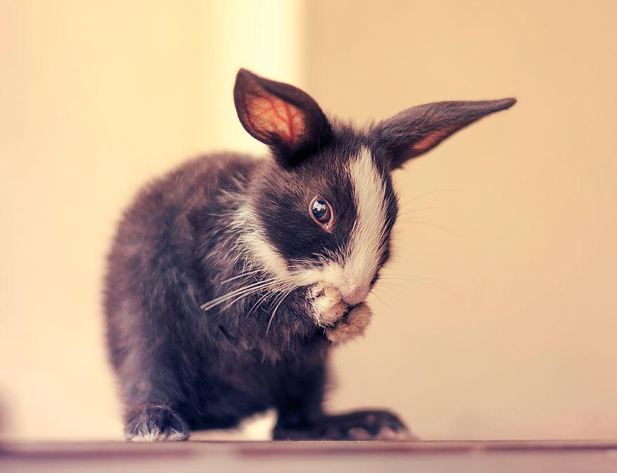 ارنب 15