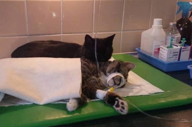 القط-الممرض-5