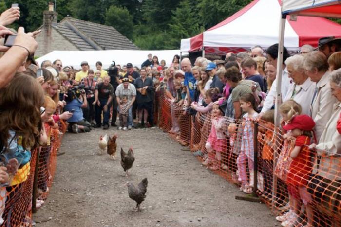 بطولة الدجاج