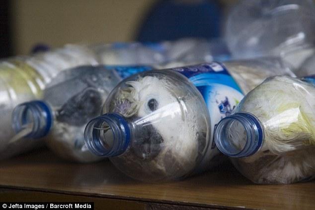تهريب ببغاوات في زجاجات بلاستيكية