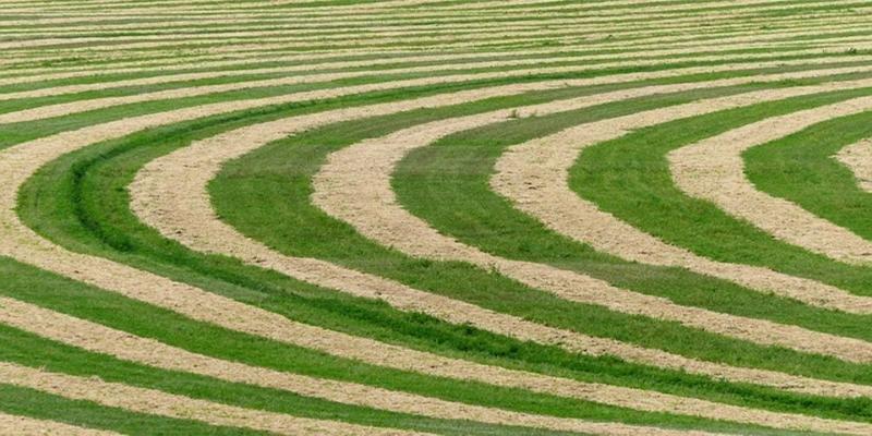 حقول المحاصيل الدائرية