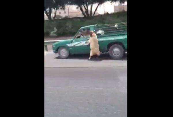 فيديو خروف-زعلان