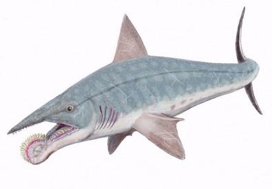 القرش ذو الفك الدوار