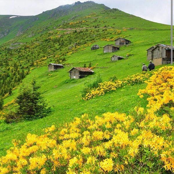 مرتفعات كاريستر شمالي تركيا.