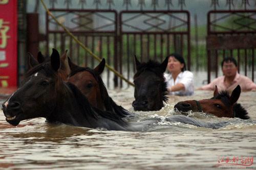 فيضانات 7