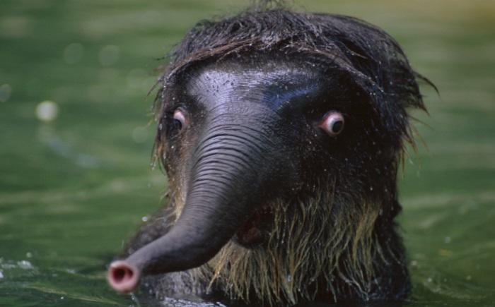 فيل 9