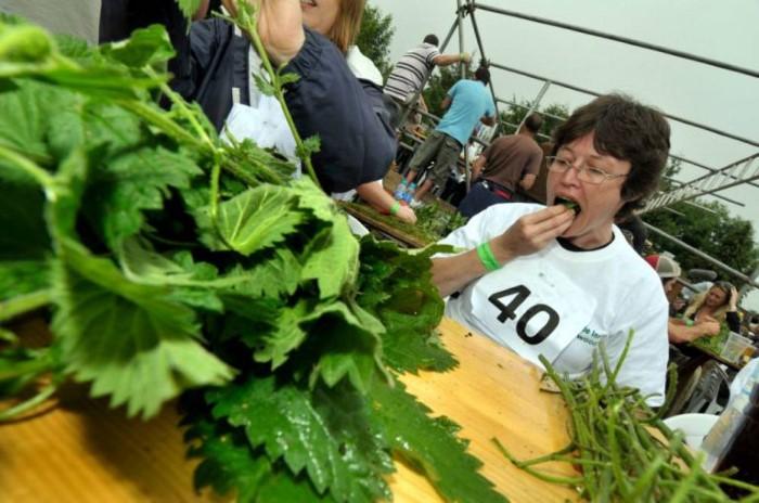 مسابقة أكل نبات القراص