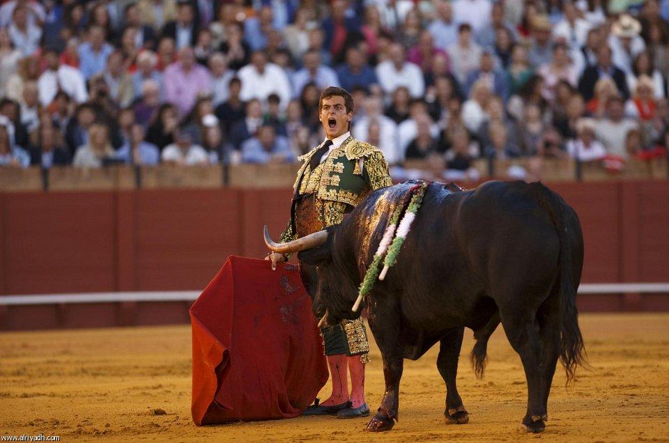 رياضة مصارعة ثيران في أسبانيا