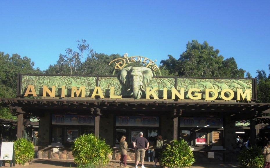 مملكة الحيوانات ديزني