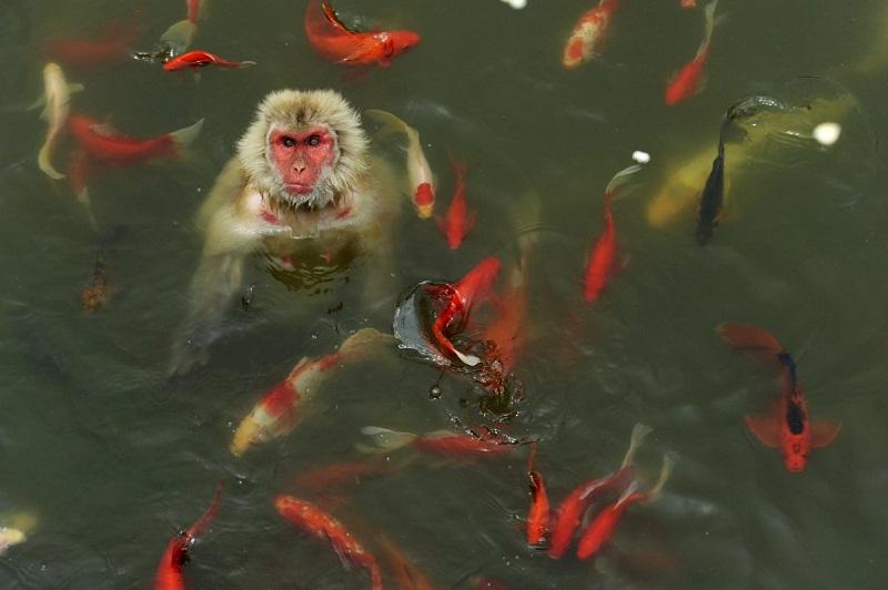 حديقة الحياة البرية، الصين