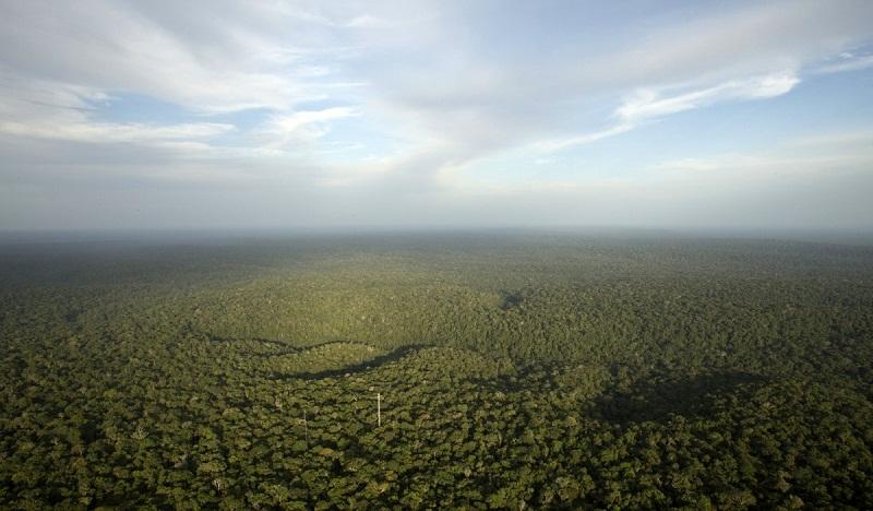 منظر من أعلى برج الأمازون في البرازيل