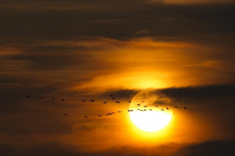 صور طيور مهاجرة إلى الشمال