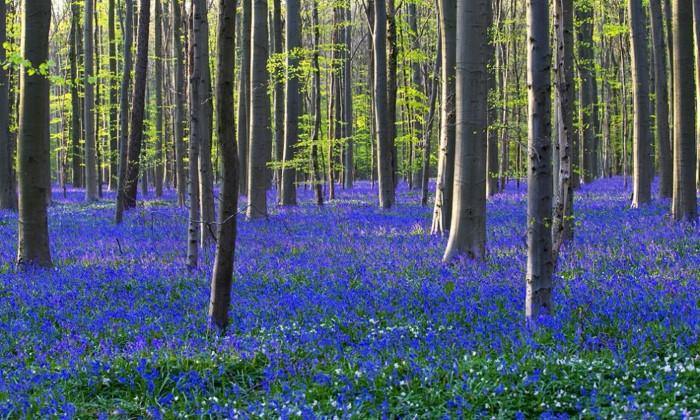 الغابة الزرقاء