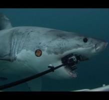غواص يفقد 5 كمرات بسبه سمك القرش ويحط 5000 دولار الي يحطلها