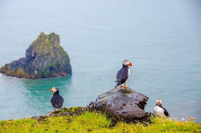 طيور الجزر