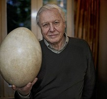 rare-elephant-bird-egg