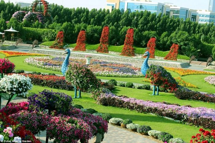 أكبر حديقة ورود4