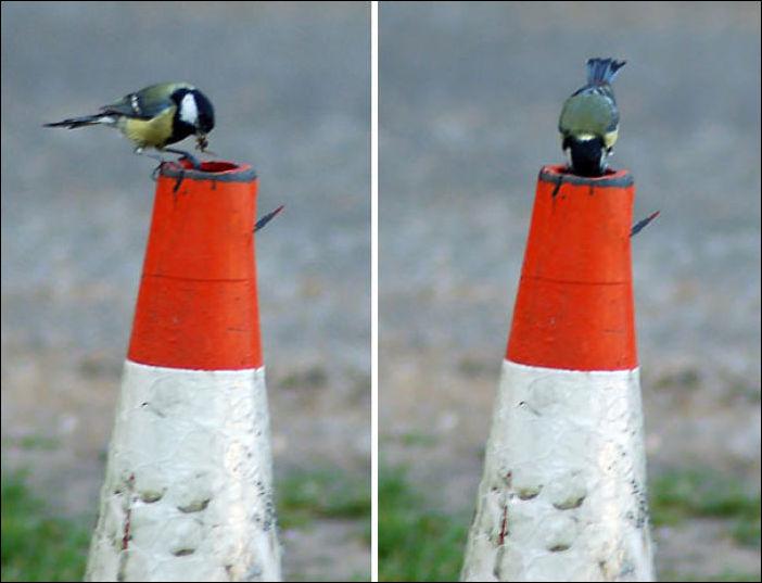 أعشاش الطيور