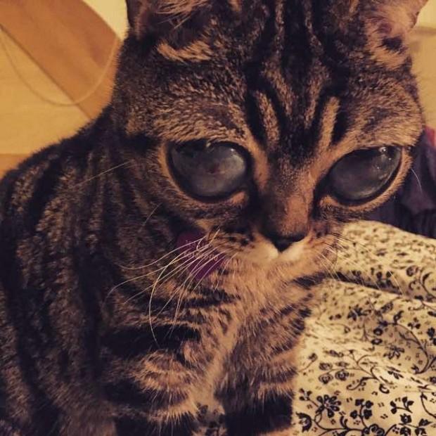 القطة-الفضائية