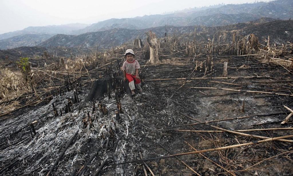 تدمير البيئة
