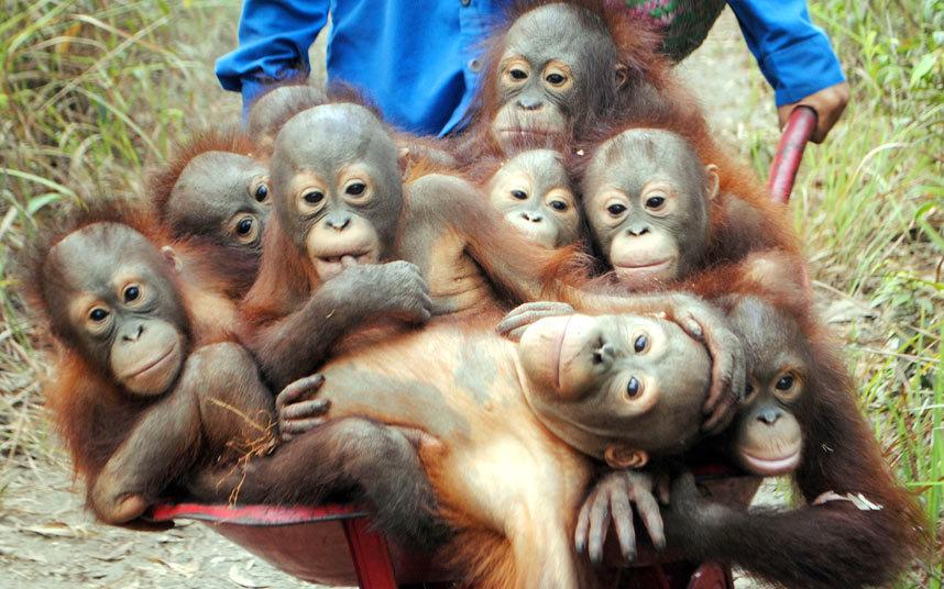 صور حول العالم مجموعة من صغار القرود تم إنقاذها من قبل مركز إعادة التأهيل IAR