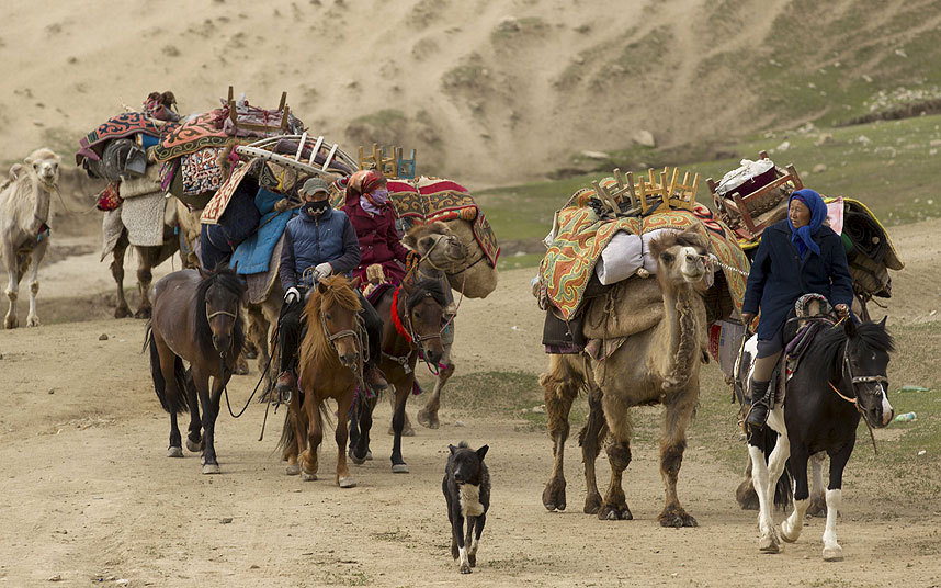 رعاة يركبون الجمال خلال تنقلهم إلى مناطق جبلية للرعي خلال الصيف في ولاية ألتاي في شينجيانغ.