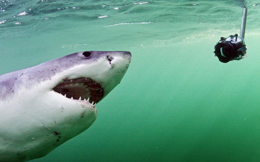 عيون سمك القرش الأبيض