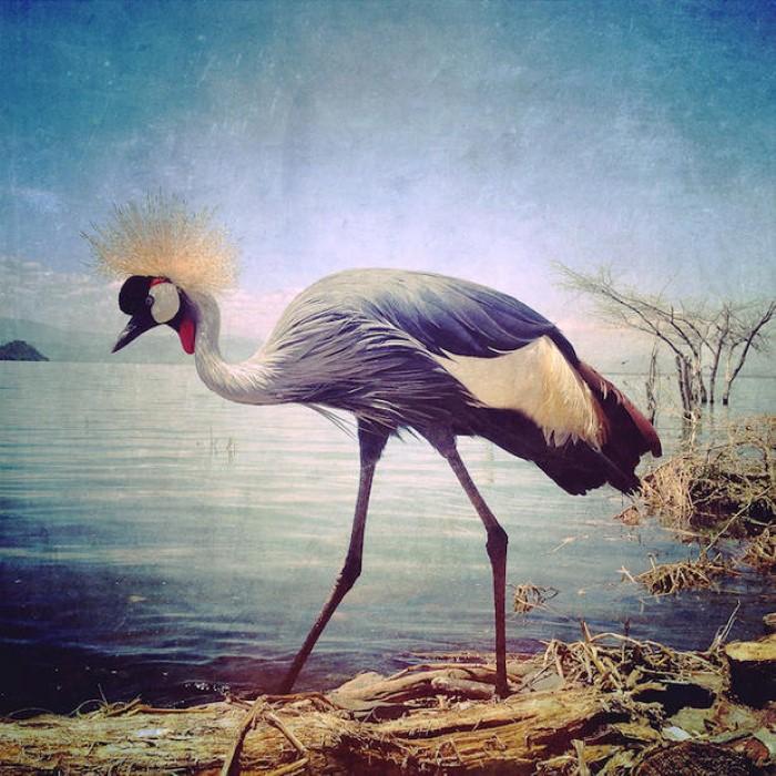 فئة الحيوانات المسابقة العالمية للتصوير بالآيفون