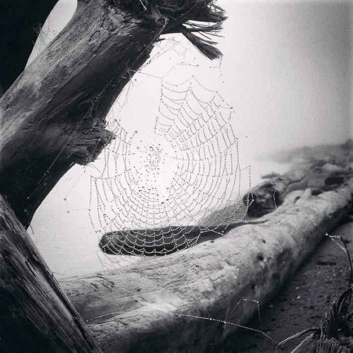 مسابقة التصوير العالمية بالآيفون فئة الطبيعة