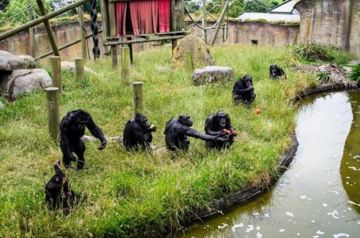 حديقة حيوان ولينغتون أفضل حدائق الحيوانات في العالم