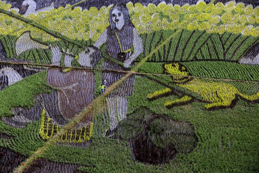 صور الفن في حقول الأرز في الصين