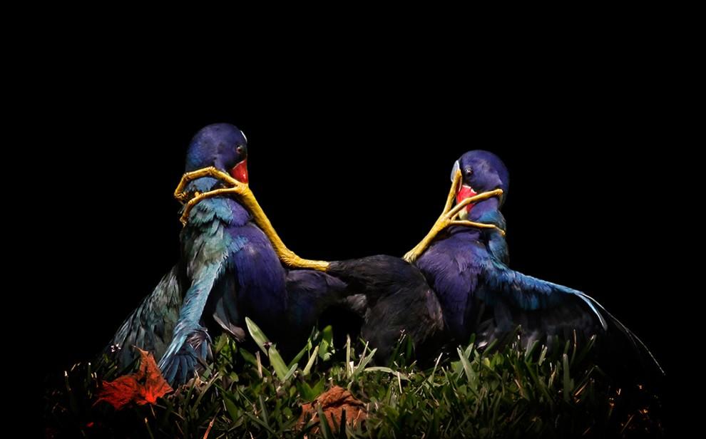 أجمل الصور من مسابقة أودوبون للتصوير الفوتوغرافي