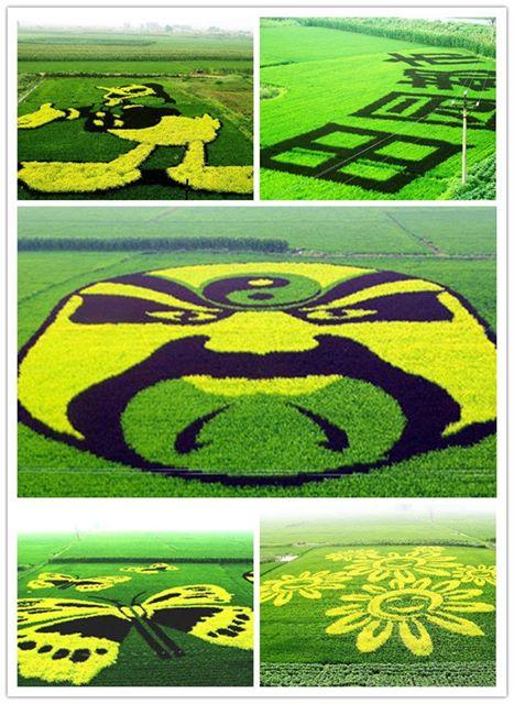 حدائق الأرز