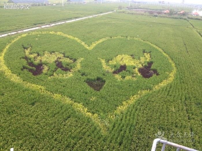 الفن في حدائق الأرز