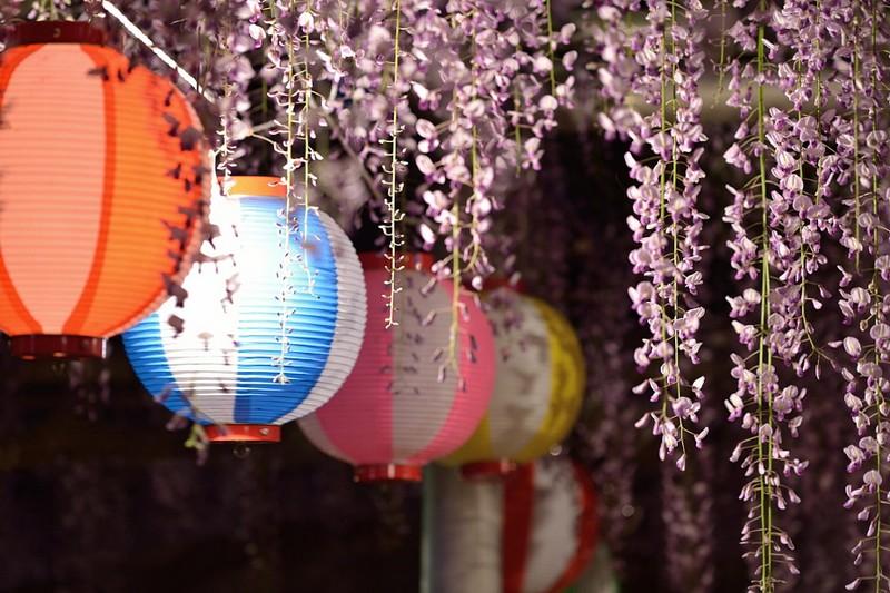 أزهار اليابان