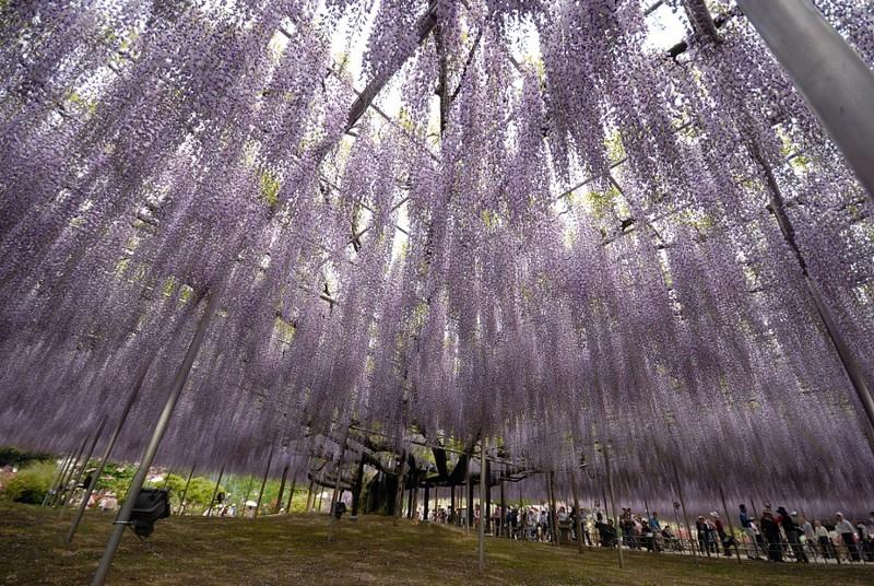 شجرة جميلة