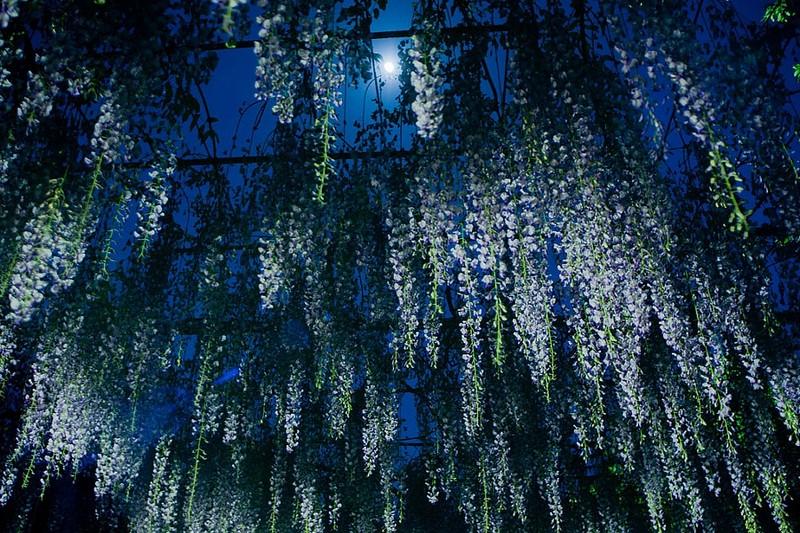 أزهار زرقاء وأرجوانية