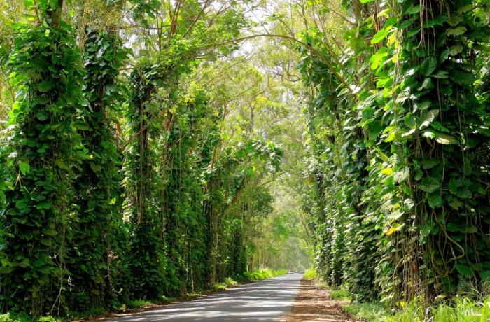 أجمل الممرات الخضراء في العالم