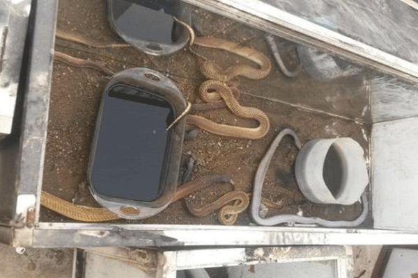 ثعابين ضخمة في حريق بجازان