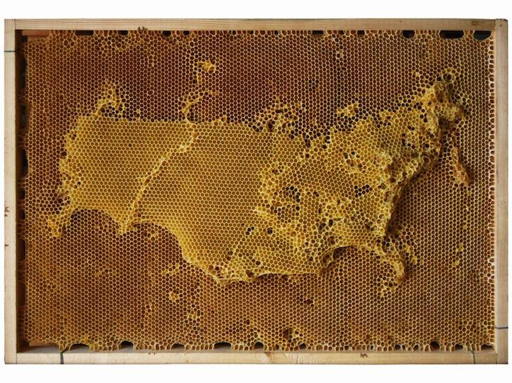 فنان يتلاعب بحركة النحل لإنشاء خرائط من شمع العسل