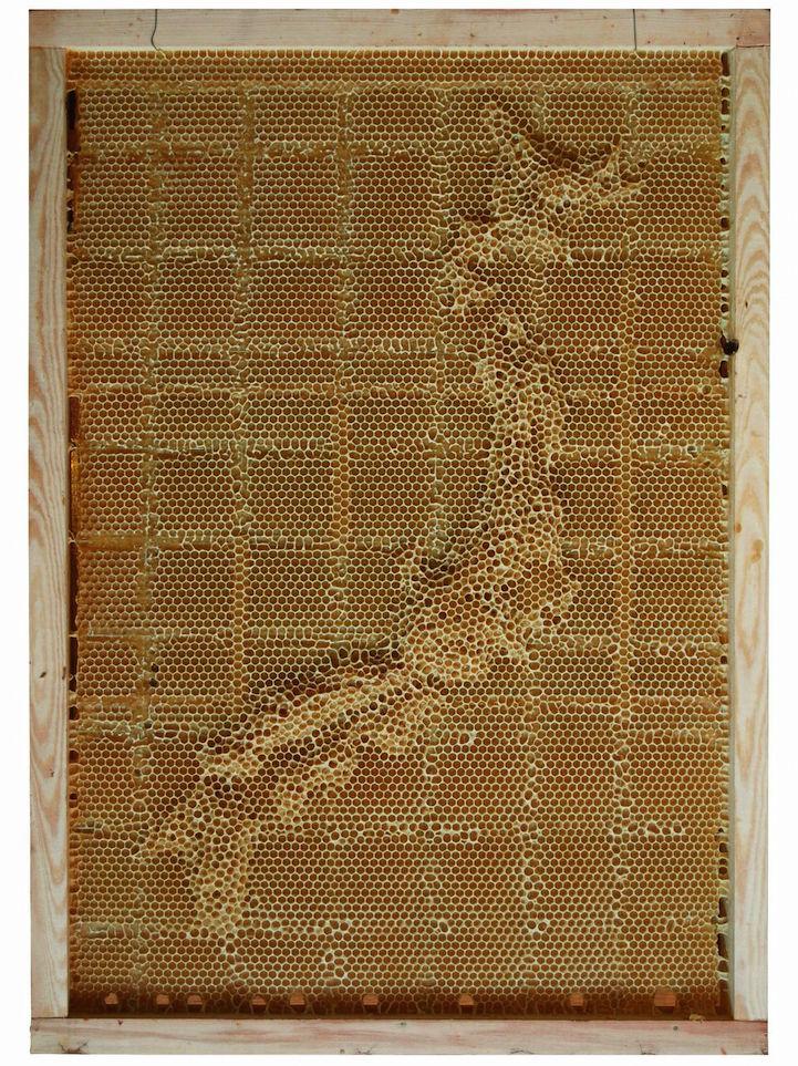 خرائط العالم من خلال شمع النحل