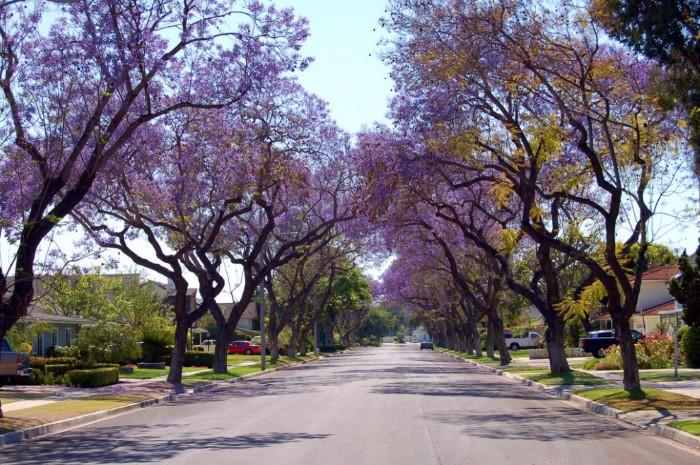 أجمل الشوارع الخضراء  الطبيعية