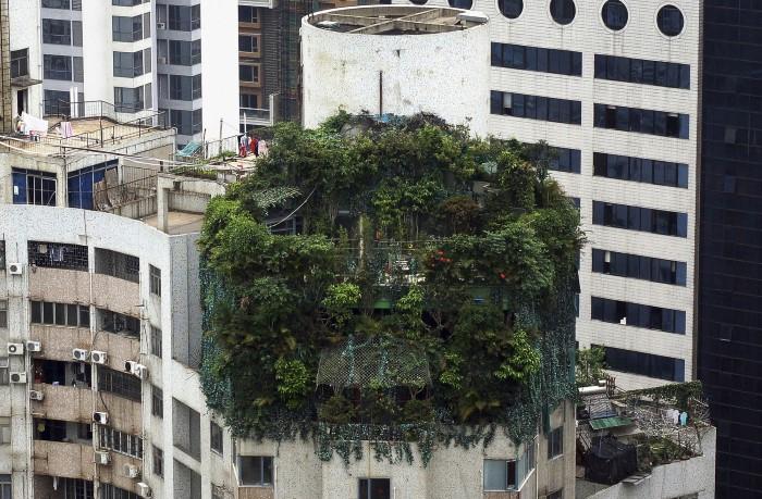 منزل النباتات