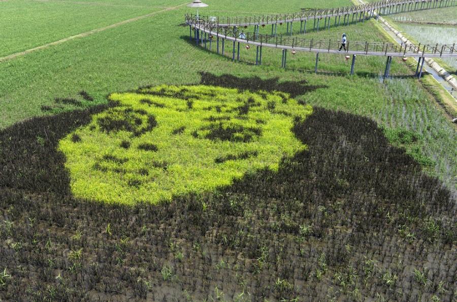 رسومات ثلاثية الأبعاد في حدائق الأرز