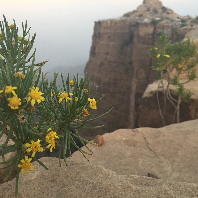 جملة الطبيعة في أبها عسير في المملكة العربية السعودية