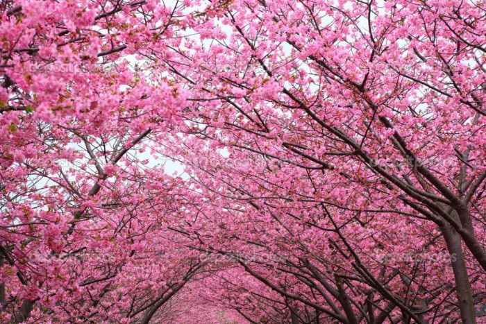 المناظر الطبيعية الخلابة في اليابان