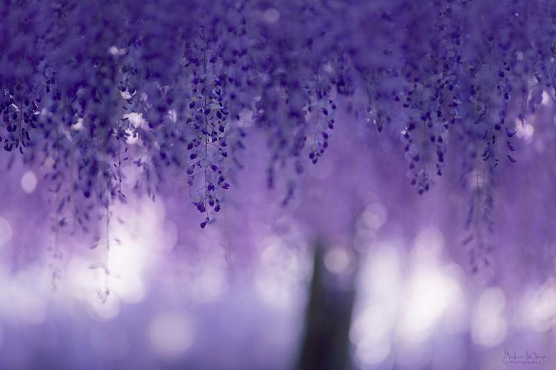 أجمل شجرة