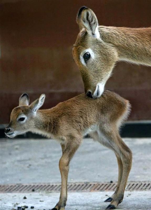 حديقة حيوان برلين