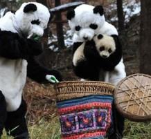 Panda Workers